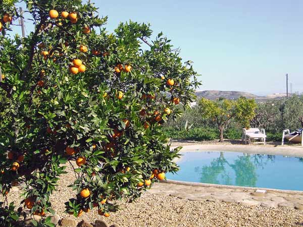 Oranges-by-pool